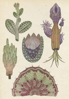 {<3} Cacti by Katie Scott – fantastic botany illustration