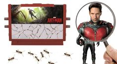 Ant Man Ant Farm Review: 2015 Hottest Xmas Kids Toys - http://movietvtechgeeks.com/ant-man-ant-farm-review-2015-hottest-xmas-kids-toys/-Little boys almost always have a fascination for farm life, and there is nothing wrong with introducing them to it by way of farm sets. However, Uncle Milton's Ant Man Ant Farm is not your typical toy farm set.