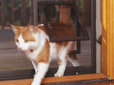 Cat Flap For Screen Door - Those that would like to buy retractable screens may first ensure the quality of the retractable Pet Screen Door, Screen House, Security Screen, Your Pet, Doors, Pets, Children, Retractable Screens, Animals