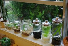 This is cute, don't know what water plants those are but I think marimo would look cute with them.