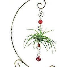 I have an air plant but not one like this! I think I want to make one like this!: