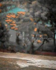 tree cb editing background - Photo #1276 - CB Editz - Free CB Background Images Blur Image Background, Blur Background In Photoshop, Desktop Background Pictures, Blur Background Photography, Studio Background Images, Background Images For Editing, Light Background Images, Picsart Background, Editing Photos