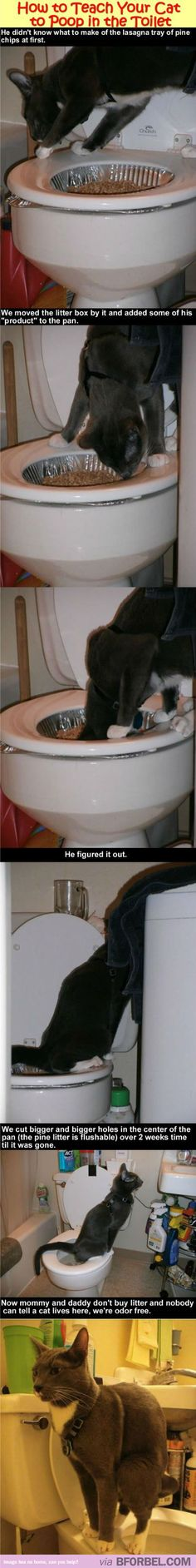How To Teach Your Cat To Poop In The Toilet. I'm allergic to cats, but if I ever get an inside one, TOTALLY doing this.