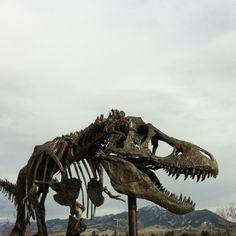 Museum of the Rockies in Bozeman, MT