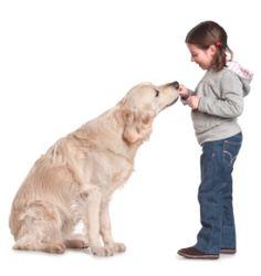 Impulse control – the 6 keys to teaching dogs calm and polite behavior