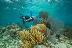 #Snorkel #Belize