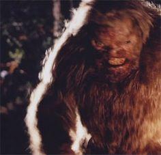 Bigfoot Carcass On Tour