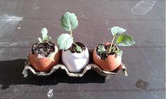 10 Formas de hacer semilleros reciclados