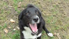 HEY! - Cooper was adopted!