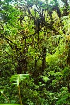 Tons of great Rainforest Resources: books, games, web sites, slide shows, movies...