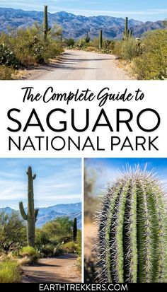 Saguaro National Park: best things to do, where to stay, when to go, and more. #saguaro #nationalpark #arizona