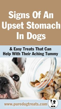 Healthy Dog Treats Easy Dog Treats: Great homemade treats that you can still give your dog - even when he has an upset tummy. Dog Biscuit Recipes, Dog Treat Recipes, Healthy Dog Treats, Dog Food Recipes, Doggie Treats, Homemade Dog Cookies, Homemade Dog Food, Dog Upset Stomach Remedies, Food Dog