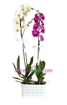 Orkide Çiçeği Bakımı, Yetiştirilmesi, budanması, sulanması, toprak, vitamin, ışık, ve rüzgar faktörlerine karşı direnci hakkında bilgiler Irrigation, Plant Breeding, How To Make Labels, Orchid Care, Growing Plants, Porch Decorating, Container Gardening, Orchids, Plants
