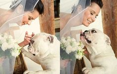 ❤ Kisses for the bride - before the wedding! ❤ Photo: Marcia Charnizon someday I will do the same thing with my bulldogs