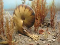 The most weird sea creatures. Scary Sea Creatures, Lovely Creatures, Underwater Creatures, Underwater Life, Cow Pictures, Salt Water Fish, Ocean Life, Marine Life, Under The Sea