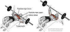 Decline barbell bench press. A compound push exercise, great for upper-body strength. Muscles worked: Sternal Pectoralis Major, Clavicular Pectoralis Major, Anterior Deltoid, and Triceps Brachii.