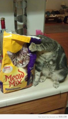 """twinleaves:  (via 9GAG - Cats like to play mind games)  """