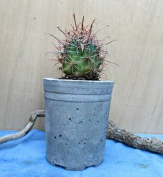 Lightweight Large Stone Pot with Cactus. $25.00, via Etsy.