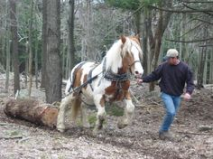 Normally horses are just a financial drain on a farm (albeit a fun one), but if made to work, it could be worth keeping one (or a pair) around.