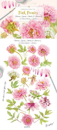 WATERCOLORWILD.GRAPHICS is a resource for watercolor flower clipart, vintage inspired.Like Vintage Botanicals, all items are recognizable by species and stylishly authentic, and (for storytelling...) you may find different angles & stages of development, as they are painted after life. All come with transparent background, are cleaned by hand to give you great technical quality .And here is:PINK PEONIES – Clipart Set!