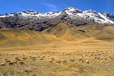 The Peruvian Altiplano (high plains) and Andes mountains between Puno and Cusco  La tierra alta entre las montañas es el altiplano