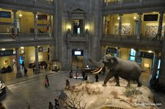 Top Places to visit in Washington DC with kids.