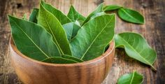 Amazing bay leaf benefits abound in healing oils and teas. Bay is a 'salt buster' herb. Add bay for flavoring, use less salt. Best Herbs To Grow, Growing Herbs, Bay Leaf Benefits, Indian Bay Leaf, Fresh Bay Leaves, Sage Plant, Types Of Herbs, Laurel Leaves, Laurel Tree