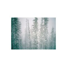 ❤ liked on Polyvore featuring backgrounds, pictures, photos, winter and photography