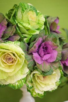 Cabbage Roses~These are Gorgeous