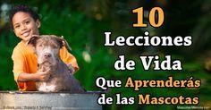 Tu hijo puede aprender mucho de tener un perro o gato, incluyendo estas 10 valiosas lecciones de vida. http://mascotas.mercola.com/sitios/mascotas/archivo/2016/04/29/10-lecciones-de-vida-de-tener-mascotas.aspx