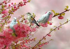 pink blossoms with sweet little grey doves....how gorgeous is this!!