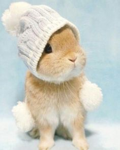 Puppies and kittens aren't the only cute animals in nature. Why would humans find baby animals cute to look at, Baby Animals Super Cute, Cute Baby Bunnies, Cute Little Animals, Cute Funny Animals, Cute Babies, Cutest Bunnies, Cutest Pets, Funny Bunnies, Baby Animals Pictures