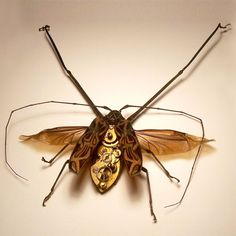 Robot-like insects and insect-like robots