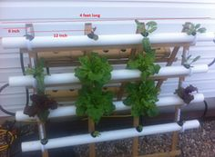 How to build a Hydroponic NFT | Information for people who love to garden indoors.