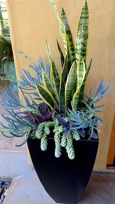 Photo: http://eastmeetssouthblog.blogspot.com/2015/07/snake-plants.html  Sanseveria, senecio and sedum morganianum ('Burro's Tail') make up this striking arrangement.  #sedum_donkeytail