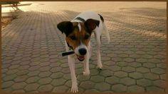 Teru ha sido #adoptado. Estamos muy felices :) http://protectoralacandela.org/teru-adoptado/