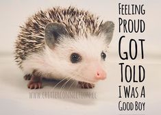 Good Advice, Hedgehog, Connection, Jokes, Lol, Humor, Feelings, Funny, Cute