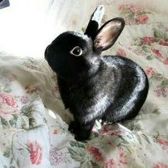 What a cute bunny! Small pets are the best!!!