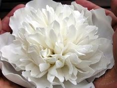 fondant cake paste peony flower peony gumpaste ***I think this looks more like a mum than a peony
