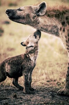 Hyenas... Look at that smile. How cute.
