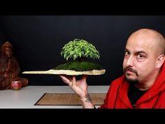 Cómo hacer bonsai con raíces sobre roca - La parte práctica - YouTube