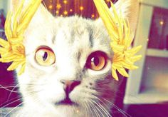 26 cats with Snapchat filters you really need to see