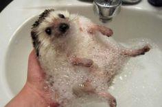 Os grandes momentos do banho dos animais - Fotos - UOL Notícias