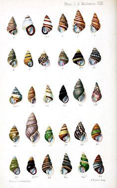 http://vintageprintable.com/wordpress/wp-content/uploads/2010/10/Animal-Seashell-Striped-1.jpg