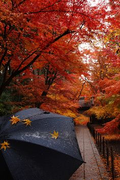 Attirant Pretty Autumn Day In The Park Rain Nature Park Trees Autumn Umbrella Fall.