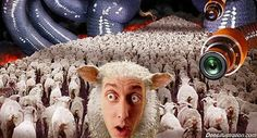 Activist Post: Sheeple: Why You Should Feel Sorry For Them.  the characteristic that absolutely defines a sheeple is not necessarily a lack of knowledge, but an unwillingness to consider or embrace obvious logic or truth in order to protect their egos and biases from harm. A sheeple's mindset is driven by self centered motives.
