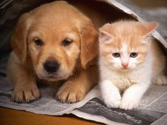 What Your Pets Tells About You: The Reality About The Owners Of Dogs And Cats. The rivalry between the owners of cats and dogs is . Cute Puppies And Kittens, Cute Cats And Dogs, Animals And Pets, Cats And Kittens, Baby Animals, Dogs And Puppies, Funny Animals, Cute Animals, Funny Cats