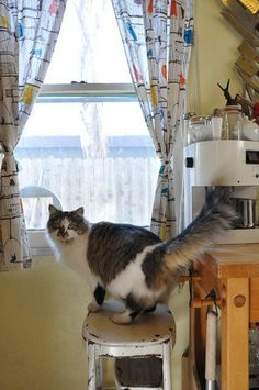 Cats in House Tours