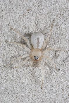 Wolf Spider Camouflaged In The Sand On A Florida Beach Childrens Books
