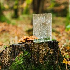 Finnish vintage glass with Norwegian mushroom!